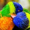 Фото. Птицы. (12 фото)