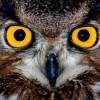 Фото. В мире птиц. (29 фото)