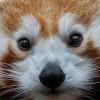 Прикольные фото животных. (16 фото)