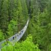 Фото. Подвесной мост Capilano. (9 фото)