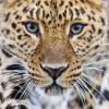 Фото. В мире животных. (15 фото)