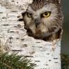 Фотоподборка. В мире птиц. (10 фото)