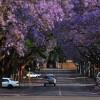 Пурпурный тоннель в Йоханнесбурге. (10 фото)