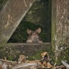 Прикольные фото животных. (24 фото)