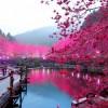 Фото. Освещенный вишневый сад. (7 фото)