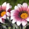 Фото красивых цветов. (14 фото)