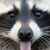Прикольные фото животных.  (20 фото)