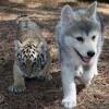 Прикольные фото животных. (17 фото)