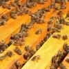 Пчеловодство и общие темы.