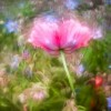 Садовые макрофотографии с красивым боке. (20 фото)