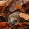 Красивые фото природы. Золотая осень. (15 фото)