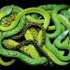 Необычные картины из змей. (11 фото)