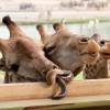 Прикольные фото животных. (18 фото)