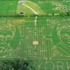 Фото. Лабиринт на кукурузном поле. (5 фото)