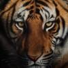 Необыкновенные портреты животных. (24 фото)