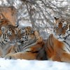 Фото. В мире животных. (25 фото)