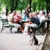 Фото. Бродячие собаки. (16 фото)