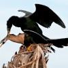 Мир птиц от Shelly Wetzel. (21 фото)