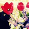 Фото. Кошки и цветы. (15 фото)