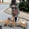 Прикольные фото животных. (35 фото)