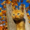 Прикольные фото животных. (30 фото)