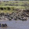 Фото. Последние минуты жизни зебры. (6 фото)