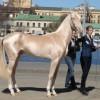 Фото. Кремовая лошадка (3 фото)