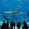 Самый большой аквариум в мире. (11 фото)