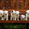Прикольные фото животных. (14 фото)