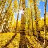 Фото. Золотая осень. (16 фото)