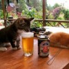 Котейка пробует пиво. (2 фото)