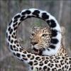 Красивые фото животных. (17 фото)
