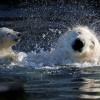 Красивые фото животных. (16 фото)