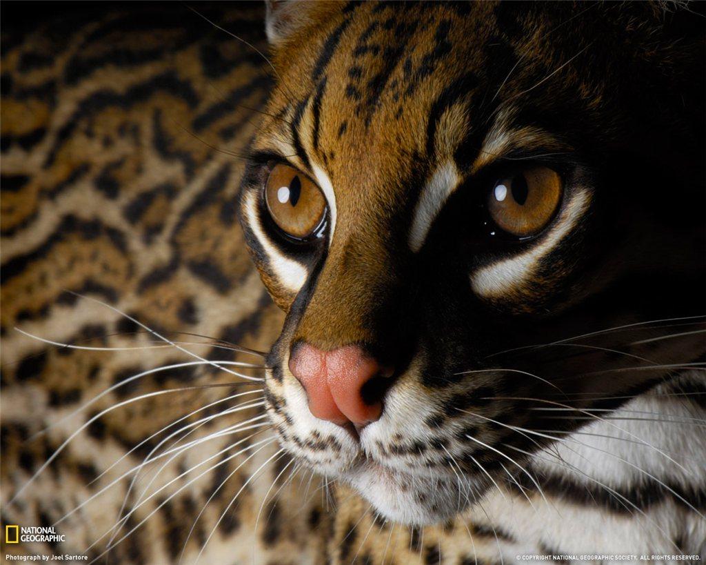 Самые интересные животные мира