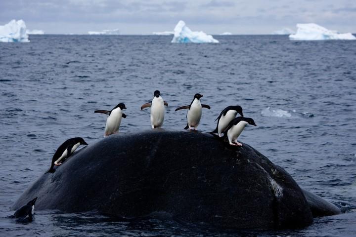 Путешествие в захватывающий мир Антарктики
