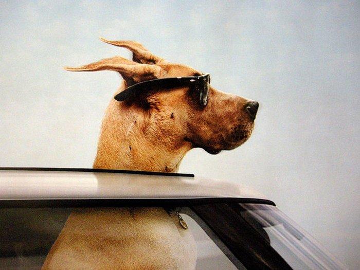 Прикольные фото животных. (8)