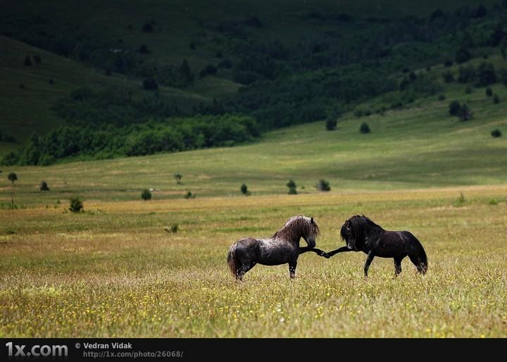 Прикольные фото животных. (6)