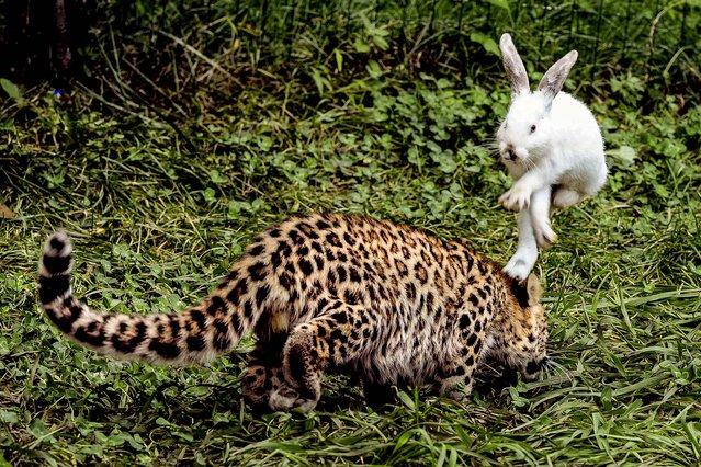 фото, животные, прикольные фото животных (15)