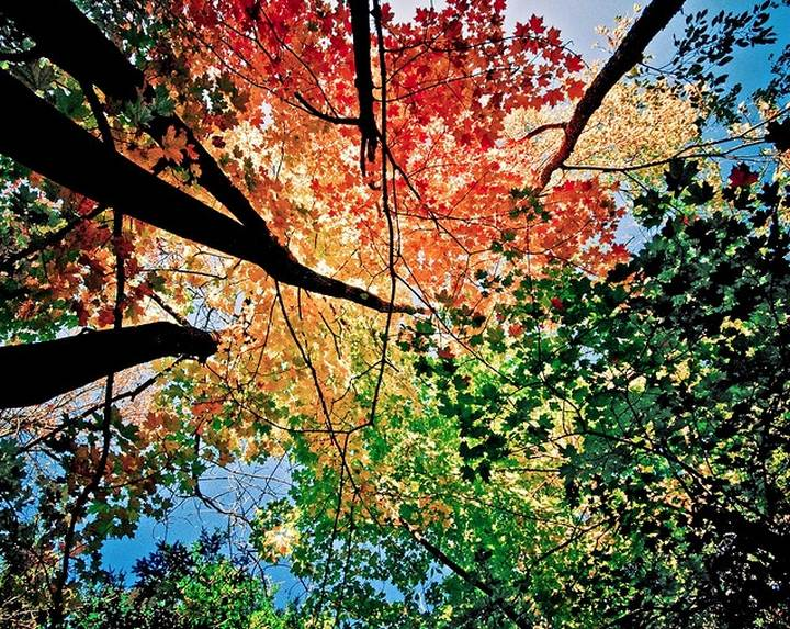 фото, природа,красивые фото природы, фотопейзажи (1)