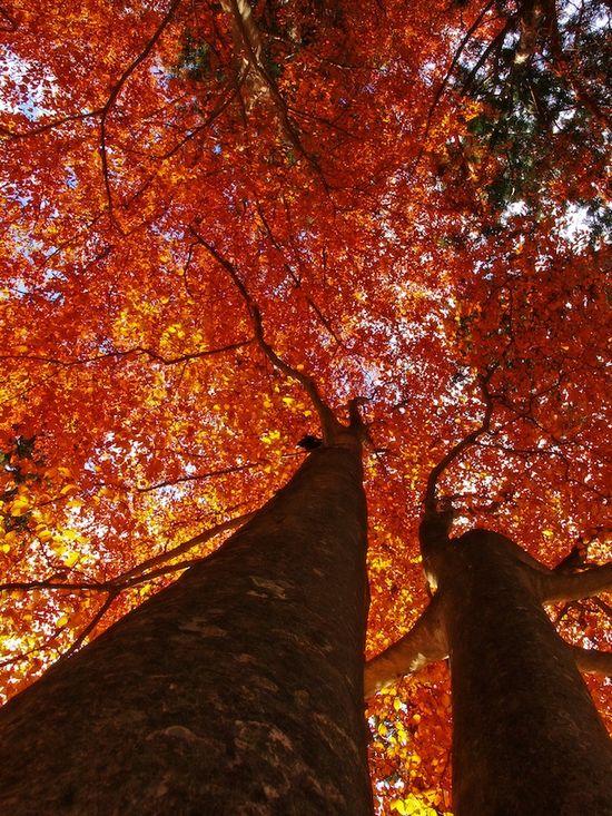 фото, природа,красивые фото природы, фотопейзажи (12)