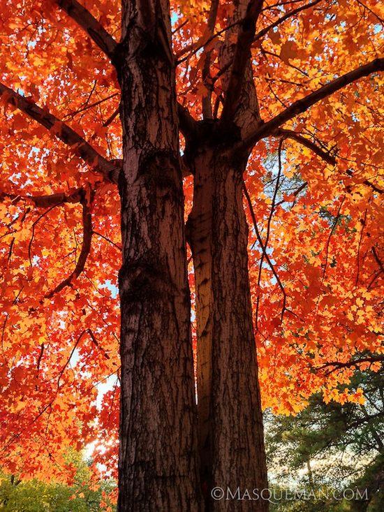 фото, природа,красивые фото природы, фотопейзажи (11)