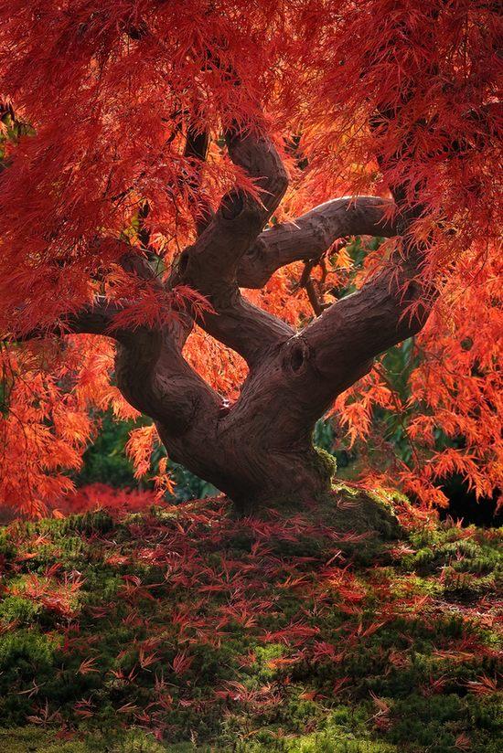 фото, природа,красивые фото природы, фотопейзажи (6)