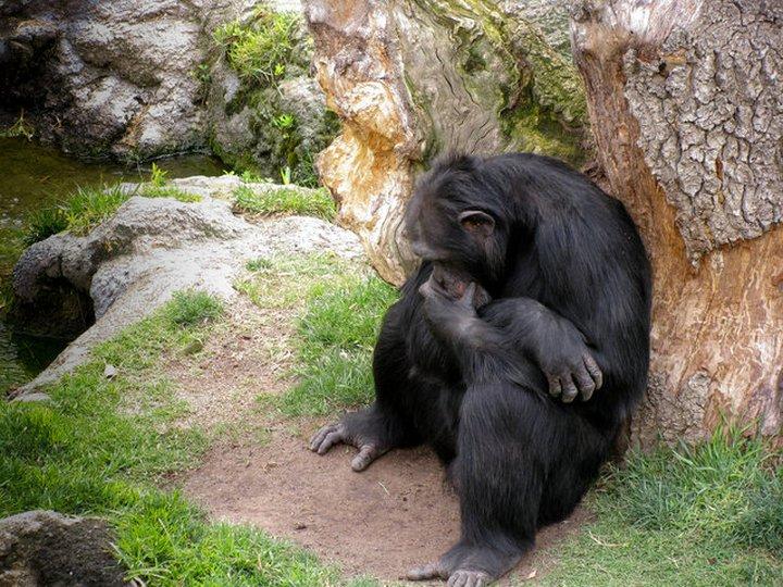 фото, животные, прикольные фото животных (3)