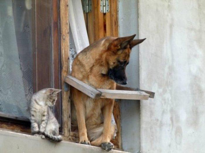 фото, животные, прикольные фото животных (10)