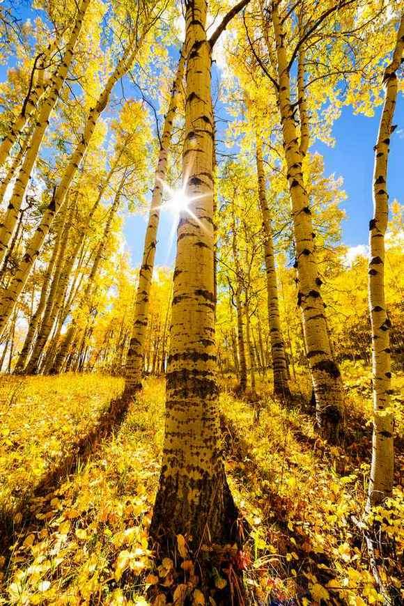 фото, природа, красивые фото природы, фотопейзажи, осень (1)