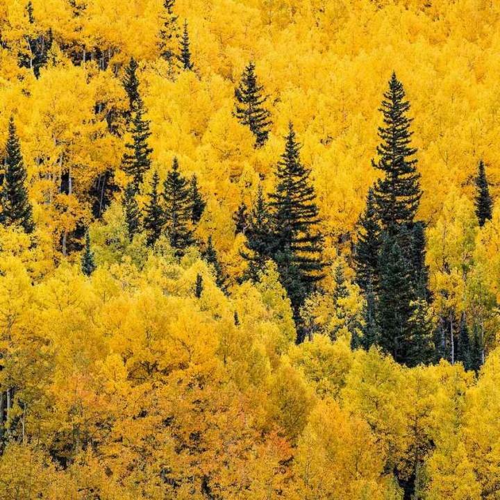 фото, природа, красивые фото природы, фотопейзажи, осень (2)