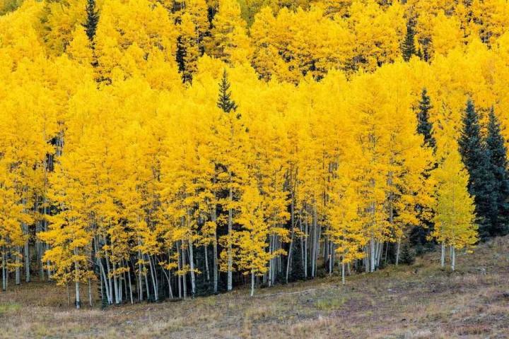 фото, природа, красивые фото природы, фотопейзажи, осень (10)