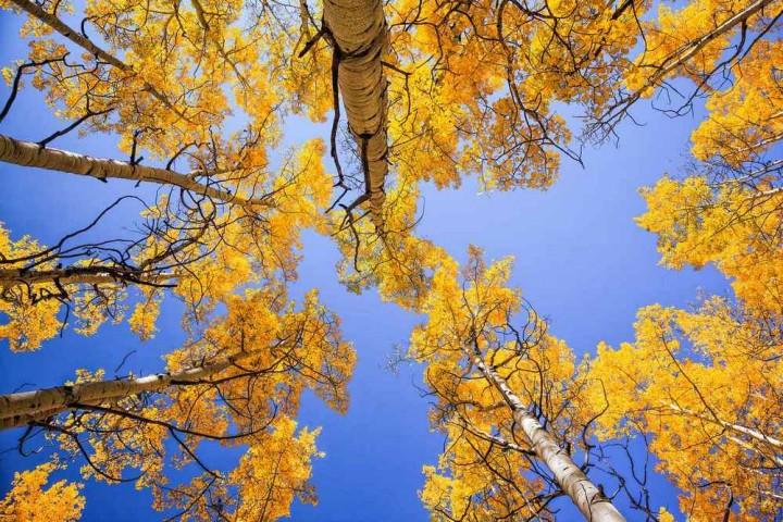 фото, природа, красивые фото природы, фотопейзажи, осень (16)