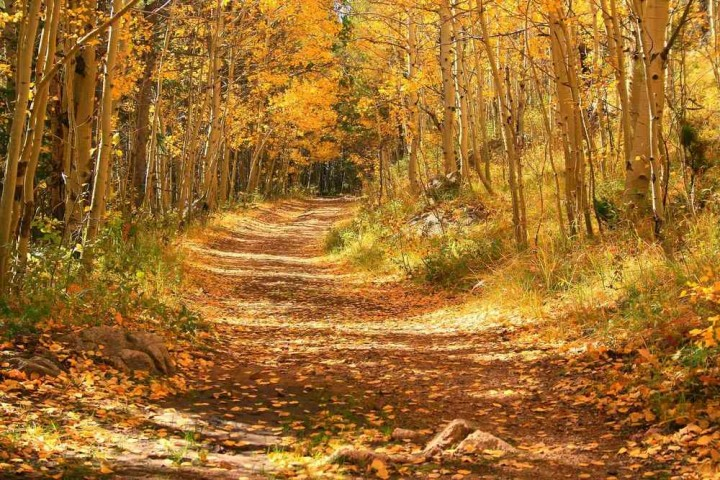 фото, природа, красивые фото природы, фотопейзажи, осень (12)