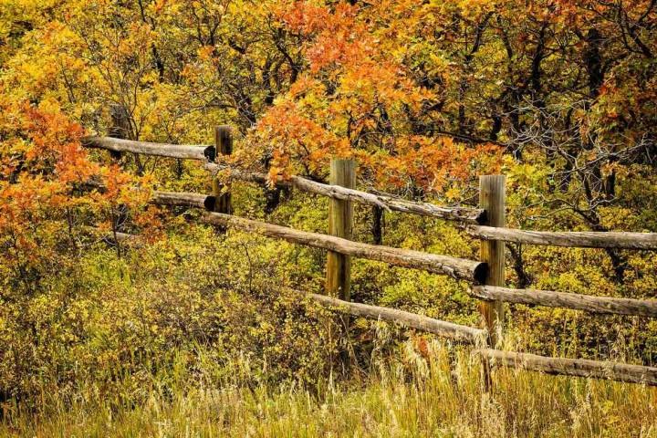 фото, природа, красивые фото природы, фотопейзажи, осень (14)